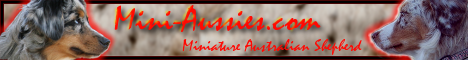 www.Mini-Aussies.com | Banner