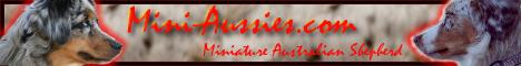 Das neutrale und kostenlose Portal rund um den Miniature Australian Shepherd auf www.Mini-Aussies.com